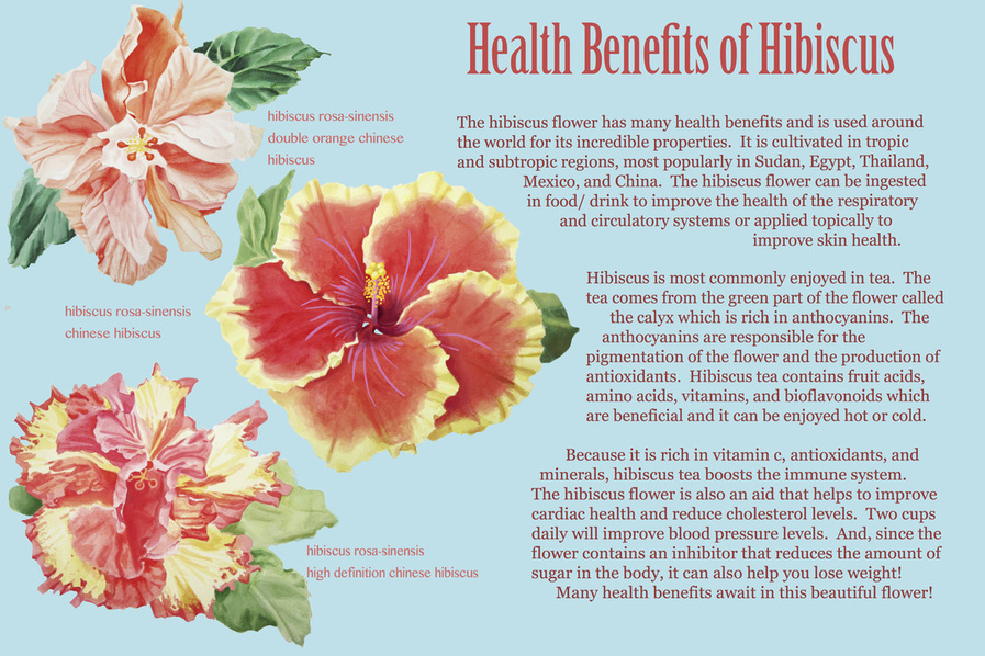 Hibiscus Are You Ready For A Change