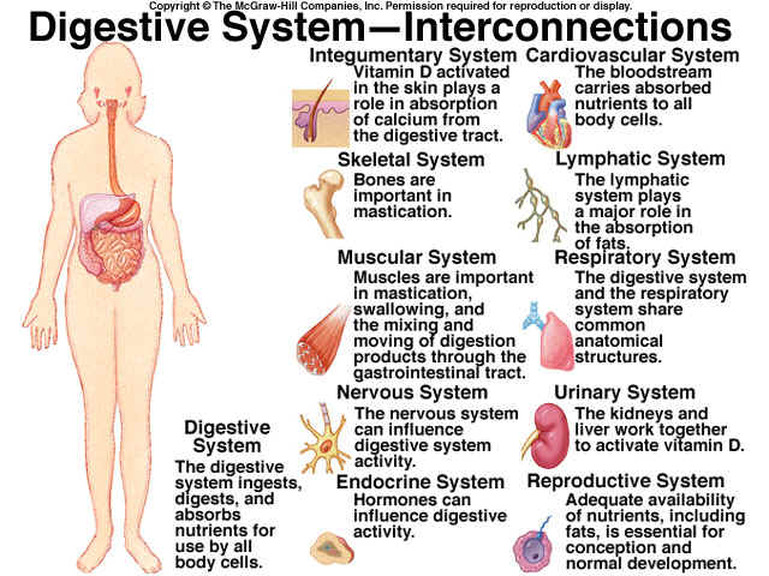 Digestive System Are You Ready For A Change